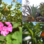 Impressions from the Mediterranean Garden